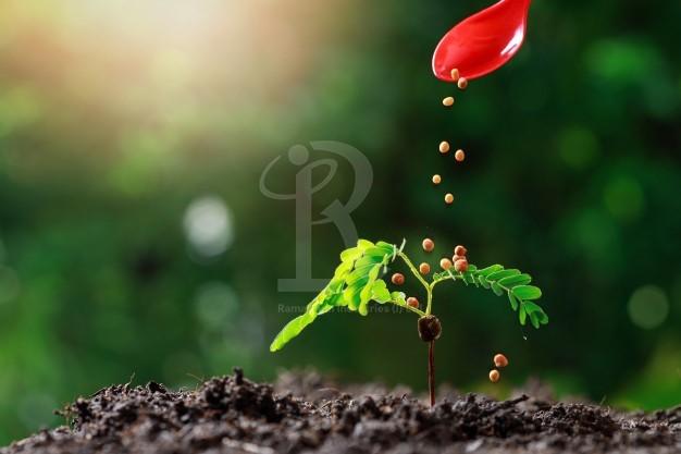 Organic Guar plant