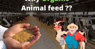Organic Guar Korma